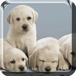 Puppies Live Wallpaper 6.0 Apk