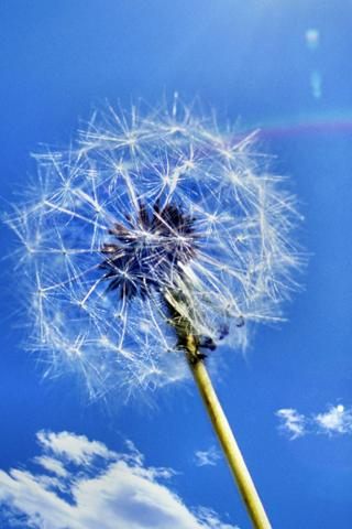 Galaxy S3 Dandelion - screenshot