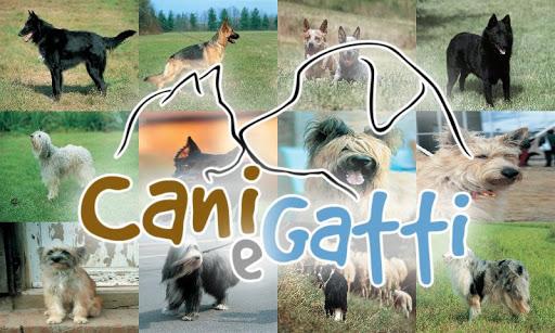 Collections - Cani Gatti