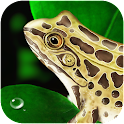 Frog Dissection icon