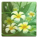 Flowers Memory HD icon