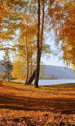 Autumn Wallpaper screenshots 5