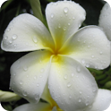 Kauai Flowers icon