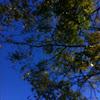 Locus tree