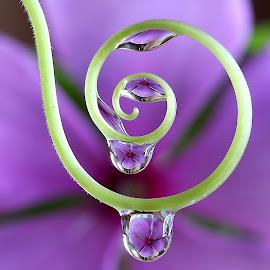 by Wahyudi Barasila - Nature Up Close Natural Waterdrops (  )