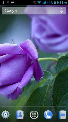 令人愉快的花卉LWP