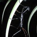 Walking Stick mimic of Scorpion