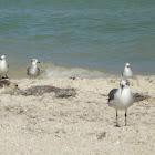 Tern or gull?