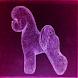 Dog Grooming Bichon Frise