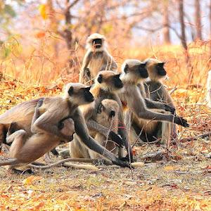 Monkeys Action.JPG