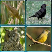 Bird Guide + Quiz Game