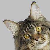 Тест какой ты котик?