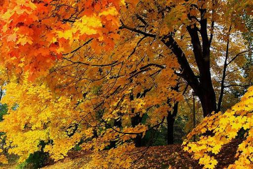 Bäume kennenlernen Baumführer