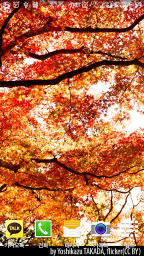 Autumn Leaves Livewallpaper