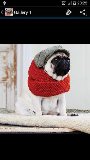 狗的時尚理念