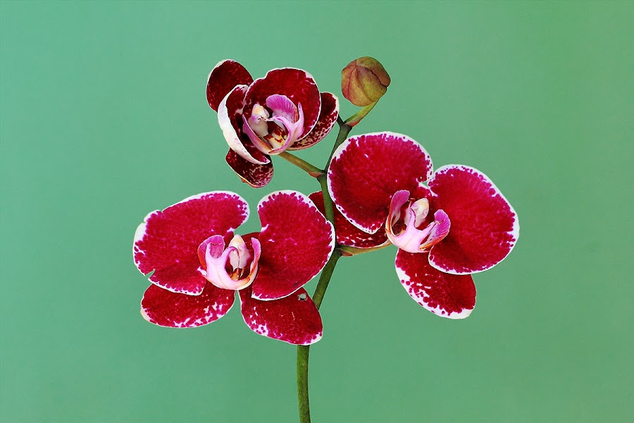 by Kuswarjono Kamal - Flowers Flowers in the Wild
