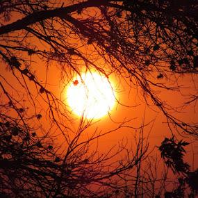 Orange Sunset by Kyla Youmans - Nature Up Close Trees & Bushes ( wind, orange, sunset, trees, sun )