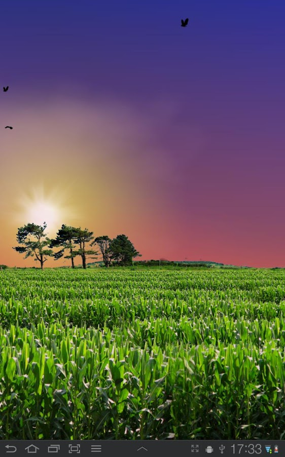 Cornfield Live Wallpaper - screenshot