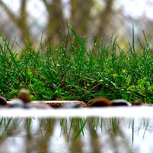 Mirror, mirror on the ground, I am the mother's nature, of all..jpg