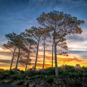 by Randall Langenhoven - Landscapes Sunsets & Sunrises ( nx300, pines, table mountain, sunset, silhouettes, trees, capetown )
