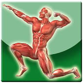 Anatomi Tubuh Manusia