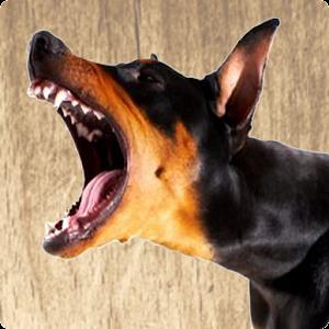 Audio To Stop Dog Barking