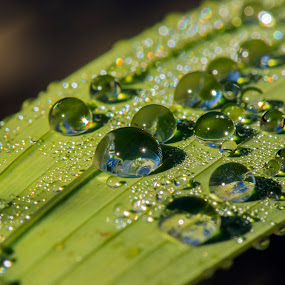 After the Rain by Darrell Evans - Nature Up Close Natural Waterdrops ( water, water drops, green, leaf, , #GARYFONGDRAMATICLIGHT, #WTFBOBDAVIS )