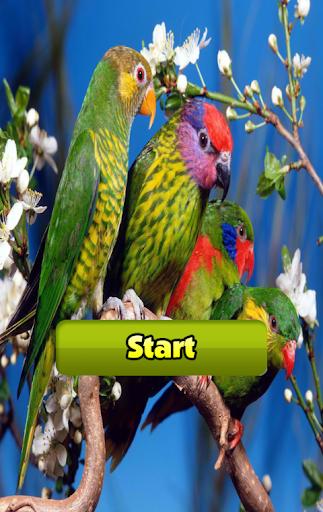 Bird Find Differences