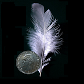 Feather Coin Status