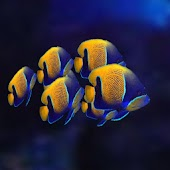 Reef Fish Theme