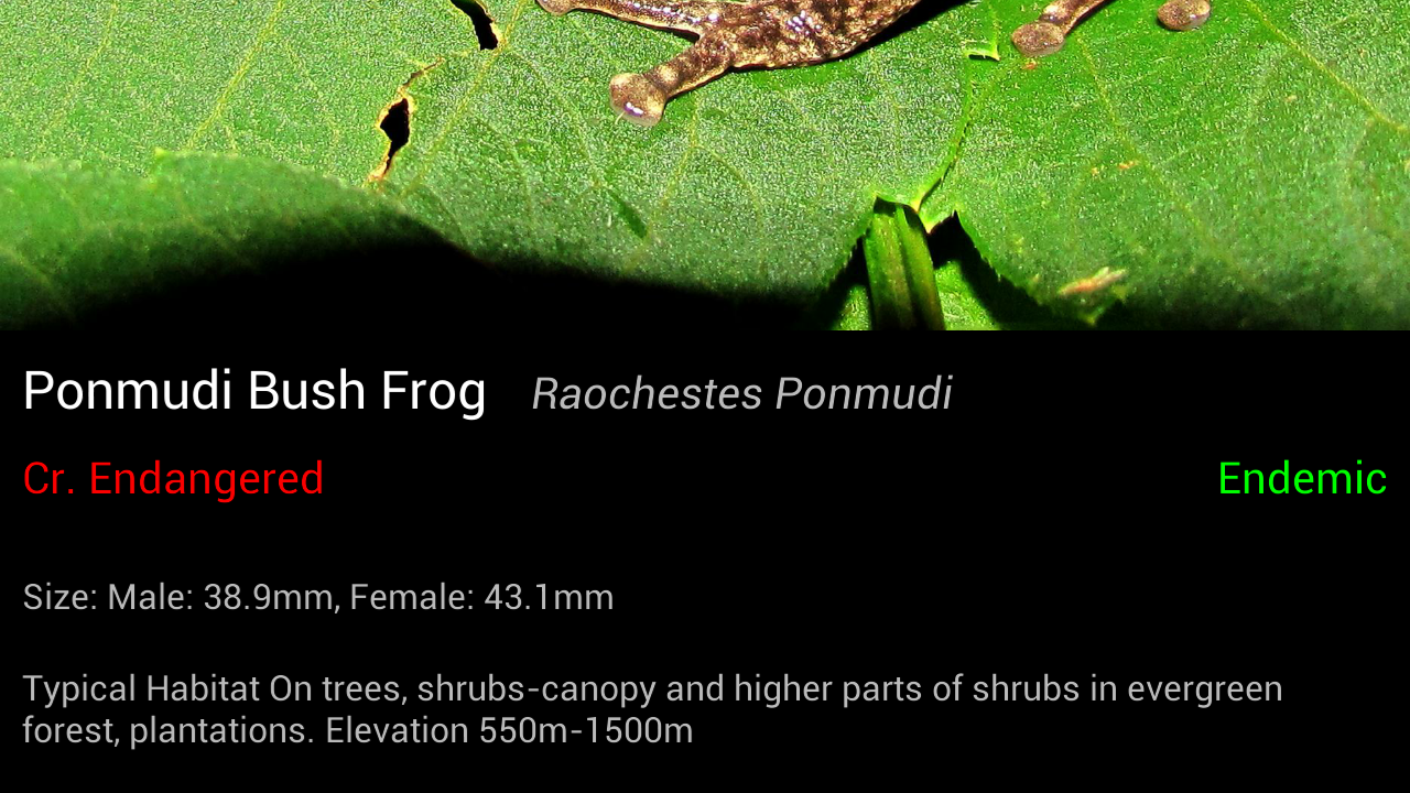Frog Find- screenshot