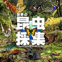 世界の昆虫採集 icon