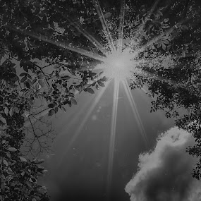 WEST VIRGINIA RAYS by Kris Rowlands - Black & White Landscapes ( west virginia north bend, photography, sun rays )