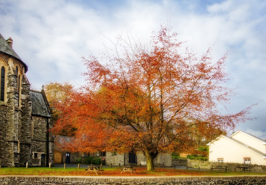 Autumn Trees in Braddan by Claire S - Nature Up Close Trees & Bushes ( fall leaves on ground, fall leaves )