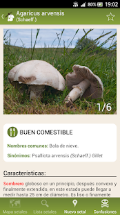 Fungipedia Screenshot