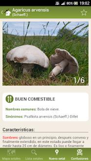 Fungipedia Gratis