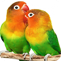 Parrot HD Wallpapers icon