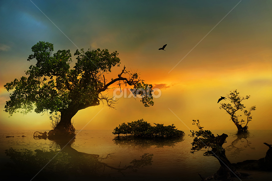 by iD 's - Nature Up Close Trees & Bushes ( beach, landscape )