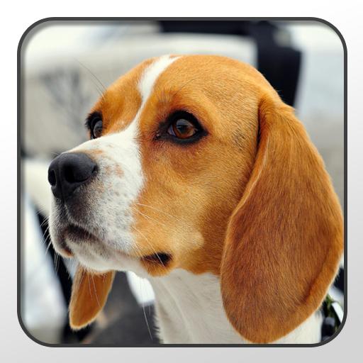 Beagle Theme - Nova/ADW/GO LOGO-APP點子
