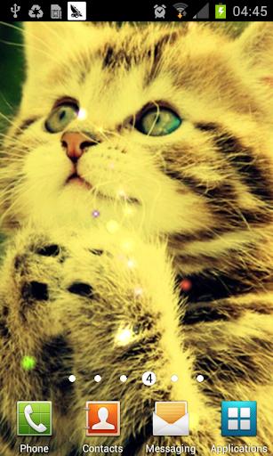 dream cat lwp