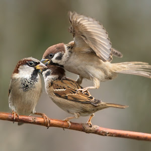 passer-sparrow-004.jpg