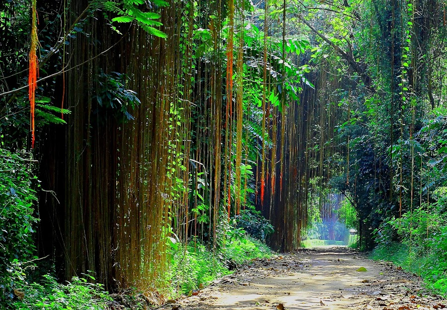 About paradise... by Fuad Arief - Nature Up Close Trees & Bushes (  )