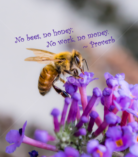 Image of: Boss Ladies No Bees No Honey No Work No Money By Jennifer Mcwhirt Typography Pixoto No Bees No Honey No Work No Money Quotes Sentences
