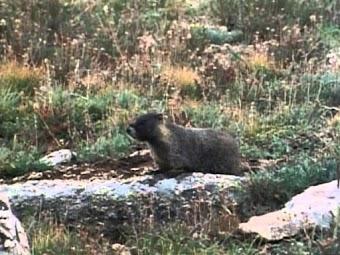 Marmot Mountain