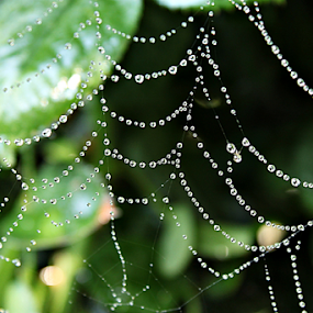 by Sonja Cvorovic - Nature Up Close Webs ( web, spiderweb )