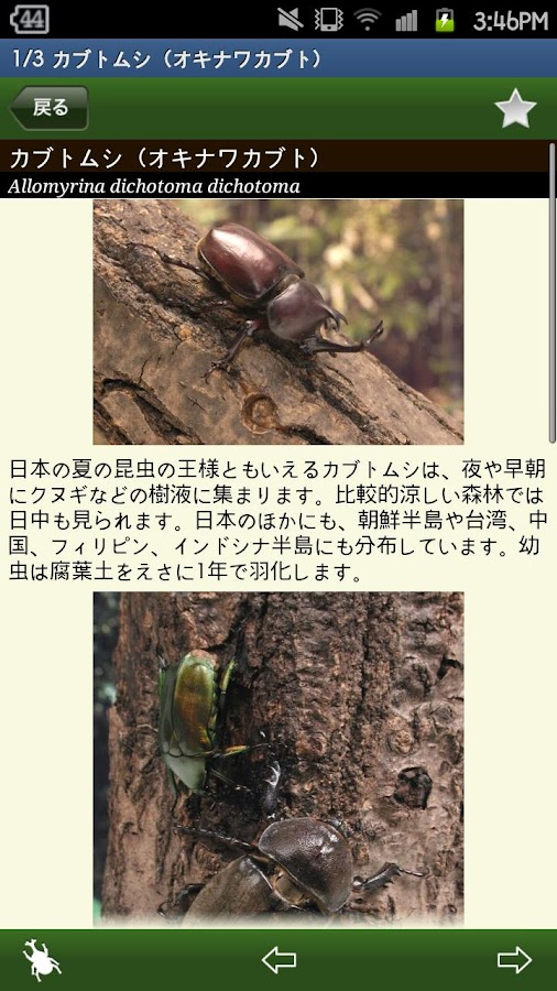 世界のカブト・クワガタ図鑑- screenshot