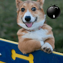 Very Funny GIFs logo