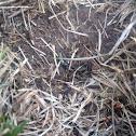 Sign of voles 😄