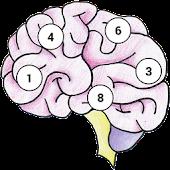 Brain Memory Exercise