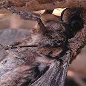 Wood moth?